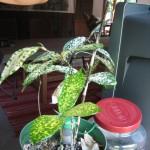 Little Plant Watering