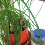 Plant Waterer for Crazy Plant II