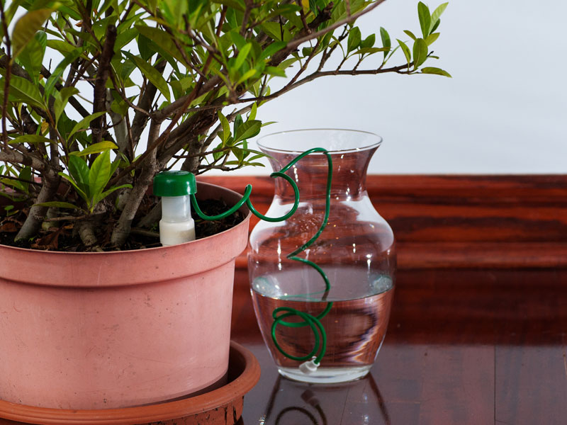how to keep potted plants from falling over