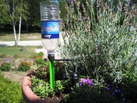 hydrospike-dripper-plant