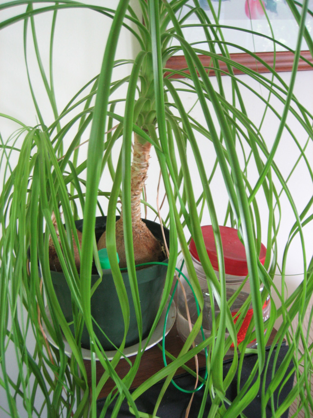 Plant Waterer for the Crazy Hair