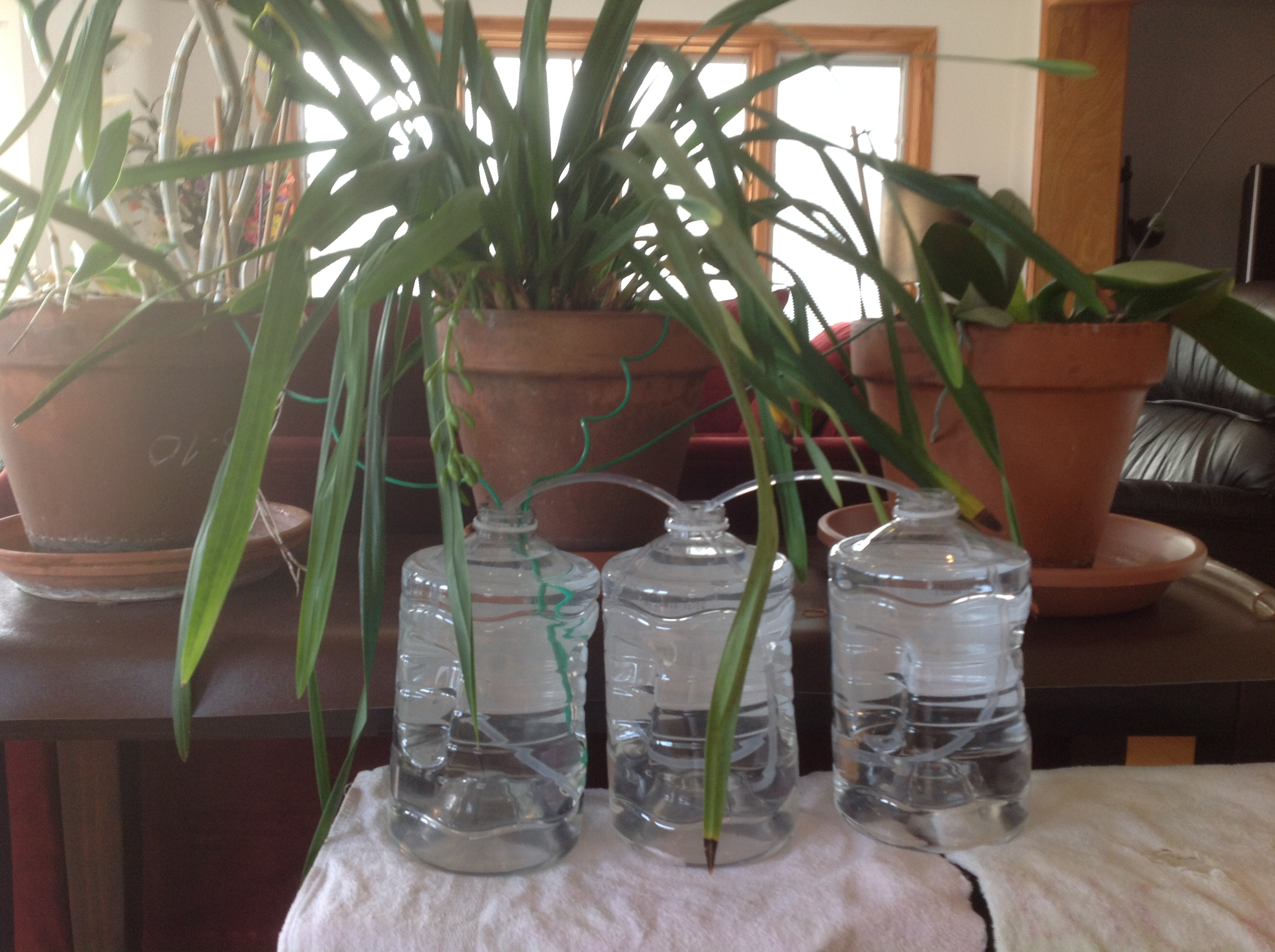 Vacation Plant Watering Set Up for a Month   HydroSpike®